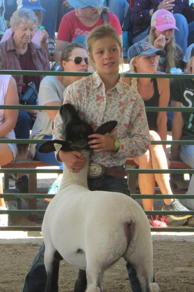Sheep Show at Middle Park Fair and Rodeo